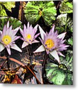 Water Lilies Water Drop And Reflection In Water Metal Print