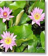 Water Lilies 3 Metal Print
