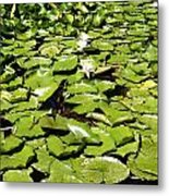 Water Lillies Metal Print