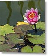 Water Lily 3 Metal Print