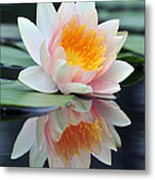 water lily 45 Water Lily with Reflection Metal Print