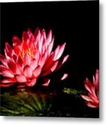 Water Lily 5 Metal Print by Julie Palencia