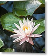 Water Lily And Lily Pads Metal Print