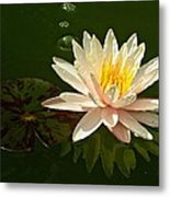 Water Lily And Pad Metal Print