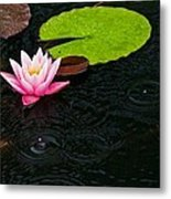 Water Lily And Raindrops Metal Print