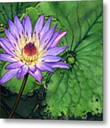 Water Lily At The Conservatory Of Flowers Metal Print