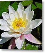 Water Lily Blossom Metal Print