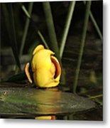 Water Lily Bud Metal Print
