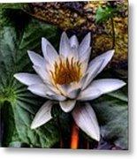 Water Lily Metal Print by David Patterson
