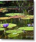 Water Lily Garden 2 Metal Print