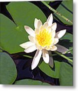 Water Lily I I I Metal Print