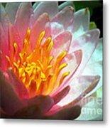 Water Lily In The Sun Metal Print