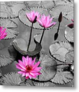 Water Lily Lotus Flower And Leaves Metal Print
