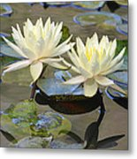 Water Lily Pair Metal Print