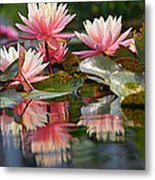 Water Lily Profusion Metal Print