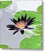 Water Lily - Purple Power - Photopower 1376 Metal Print