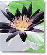 Water Lily - Purple Power - Photopower 1377 Metal Print