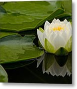 Water Lily Reflection II Metal Print