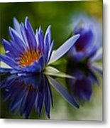 Water Lily Reflections Metal Print