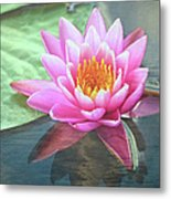 Water Lily Metal Print by Sandi OReilly