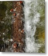 Water Logged Metal Print