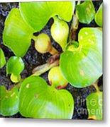 Water Plants 1 Metal Print
