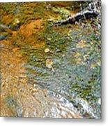 Water Plants 2 Metal Print