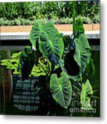 Water Plants Metal Print