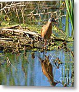 Water Rail Reflection Metal Print
