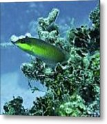 Water World Three Metal Print