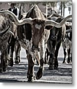 Watercolor Longhorns Metal Print