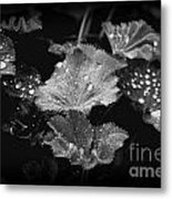 Waterdroplets Metal Print