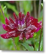 Waterdrops On Petals  Metal Print