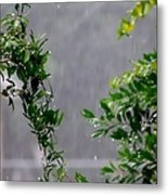 Watered By Nature Metal Print