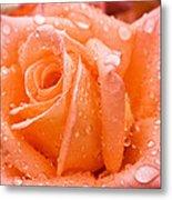 Watered Rose Metal Print