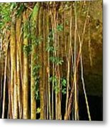 Waterfall Of Jungle Tree Roots Metal Print