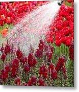 Watering The Garden Metal Print