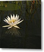 Waterlilly 5 Metal Print