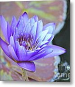 Waterlily And Bee Metal Print