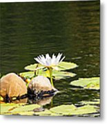 Waterlily And Coconuts Metal Print