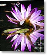 Waterlily And Dragonfly Metal Print