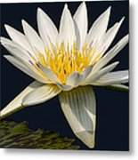 Waterlily And Pad Metal Print by Susan Candelario