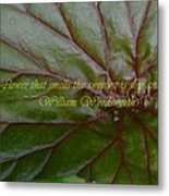 Waterlily Leaf Macro Metal Print