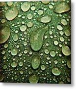 Raindrops On Watermelon Rind Metal Print