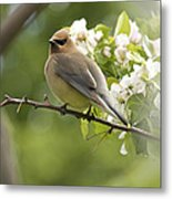 Waxwing In A Dream Metal Print