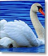Wayward Swan 2 Metal Print