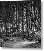 We Follow The Path Metal Print by Jon Glaser