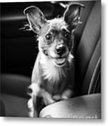 We Goin For A Ride Metal Print