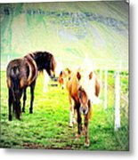 We Live Right Here Inside This Fence And Under This Big Mountain  Metal Print
