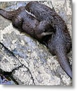 We Otter Snuggle Up Metal Print